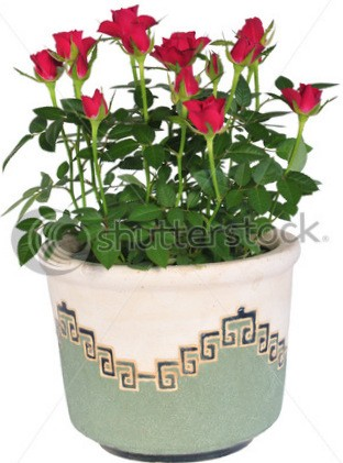 Розы серии Party -of-beautiful-red-rose-flowers-82374694 - копия
